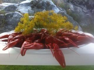Kräftskiva, das schwedische Krebsfest