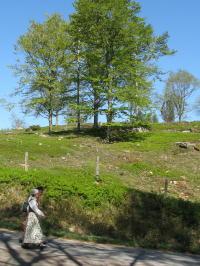 Dorf Äskhult