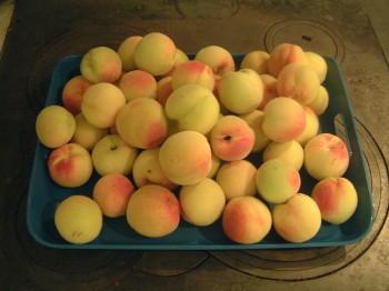 Schwedische Pfirsiche