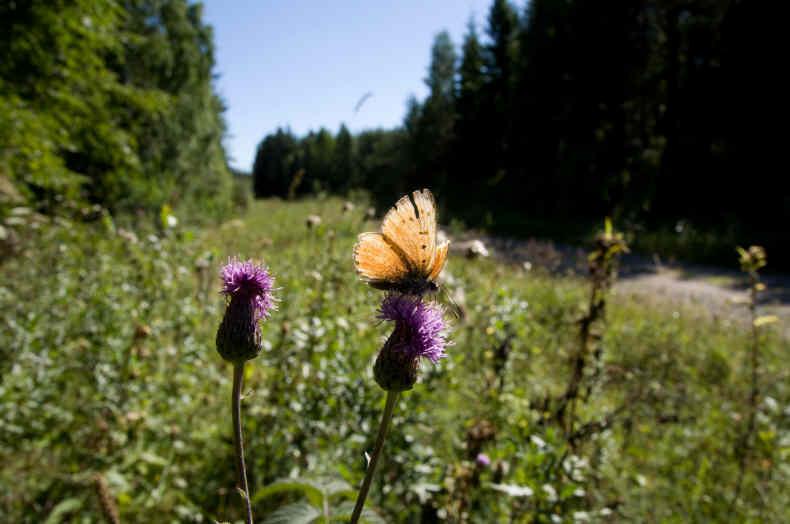 Grinduga Schmetterlingsweg