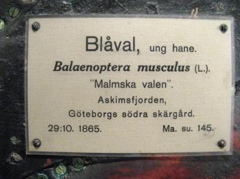 Plakette am Malmschen Wal