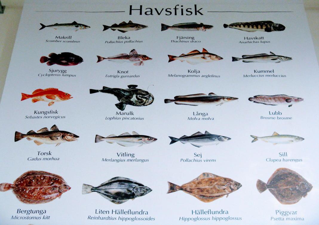 fisch in schweden fischarten fischauktionen wissenswertes. Black Bedroom Furniture Sets. Home Design Ideas