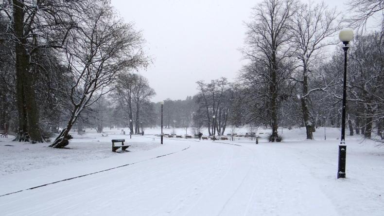 Winter im Slottsskogen
