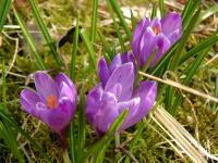 Schweden im Frühling
