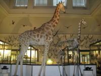 Naturhistorisches Museum Göteborg