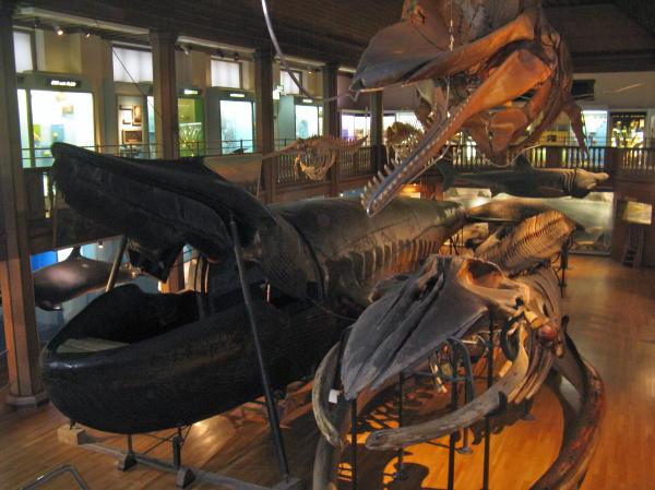 Malmscher Wal