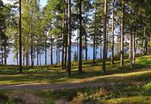 Schweden Wald
