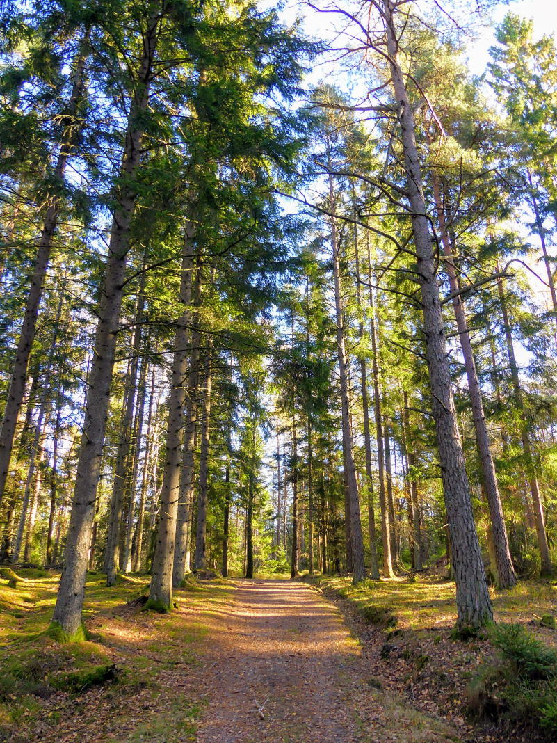 Waldbaden in Schweden