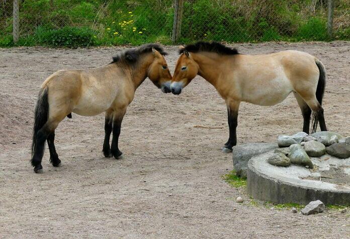 Nordens Ark Tierpark, Bohuslän