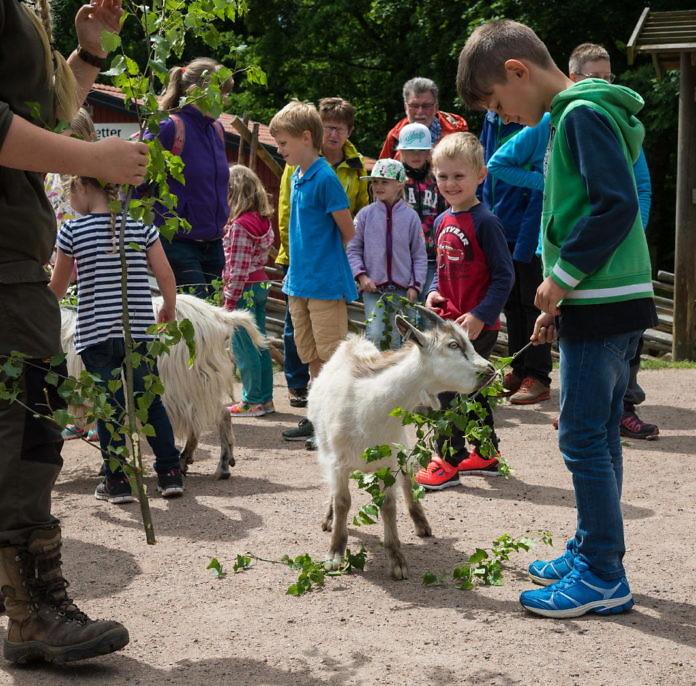 Skånes Djurpark in Höör - Tierpark und Shaun-das-Schaf-Land