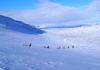 Huskyschlittenfahrt in Kiruna