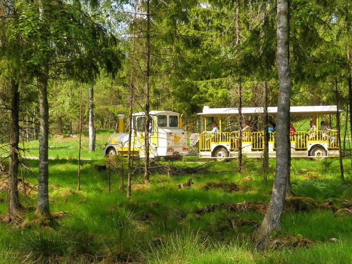 Der Smålandet Elchpark - Markaryds Elchsafari