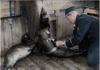 Seehunde im Kriegsdienst - Die Insel Gålö in den Stockholmer Schären